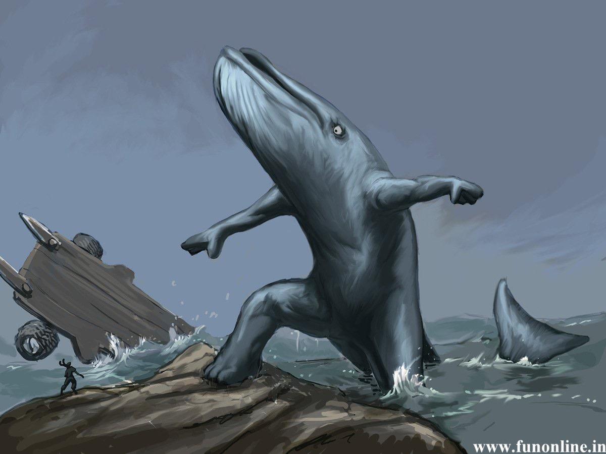 whale revenge
