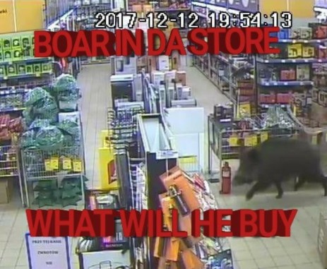 boar in the store